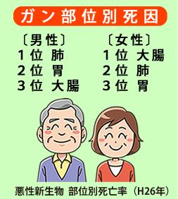 ガン部位別死因 男性 1位肺 2位胃 3位大腸 女性 1位大腸 2位肺 3位胃 / 悪性新生物 部位別死亡数(H26)